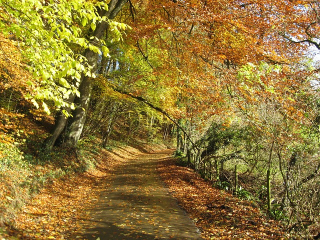 Fall-foliage-567901_640